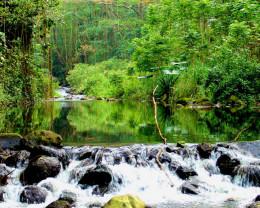 Wiapeo Valley, Big Island, Hawaii.