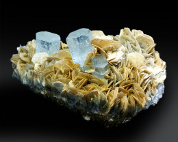 Natural Aquamarine Crystals with Mice and Albite - 543 g