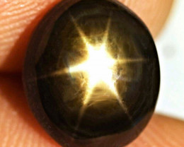 10.24 Ct. Elegant Six Ray Thailand Star Sapphire - Gorgeous