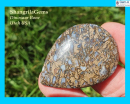 reserved for customer 41mm Dinosaur bone cabochon from Utah AAA grade 50CT