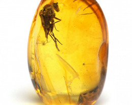 Baltic Amber with natural fossil inclusion - Fly