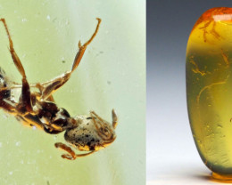 Baltic Amber with natural fossil inclusion - Ant