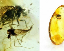 Baltic Amber with natural fossil inclusion - Fly and midge