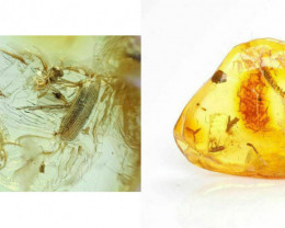 Baltic Amber with natural fossil inclusion - with Mite, Beetle, and Wasp in
