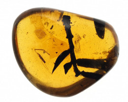 7.78 carats - Burmese Amber with natural fossil inclusion - Twig with sever