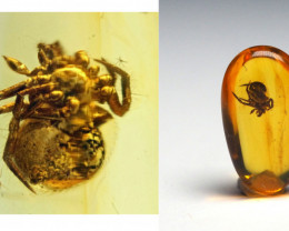 Baltic Amber with natural fossil inclusion - Araneae: Araneida - Spider
