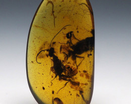 Burmese Amber with natural fossil inclusion - Pair of Hymenoptera - Wasps