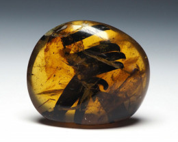 13.91 ct - Burmese Amber with natural fossil inclusion - Branch with leaves