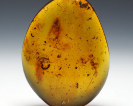 10.57 ct - Burmese Amber with natural fossil inclusion - Diplopoda - millip