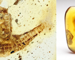 Possible lizard skin and other fossil insects in Burmese Amber