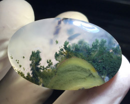 34.55 CT COLLECTOR PIECES MOSS AGATE PICTURE TREE