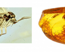 Baltic Amber with natural fossil inclusion - Super detail gnat