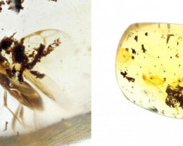Burmese Amber with natural fossil inclusion - Wasp