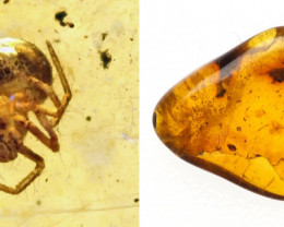 Baltic Amber with natural fossil inclusion - Spider