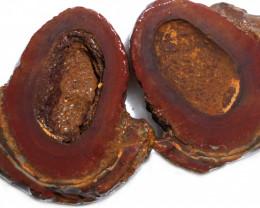 349.35 CTS YOWAH PHANTOM NUTS SPECIMEN-AUSTRALIA [MGW8078]