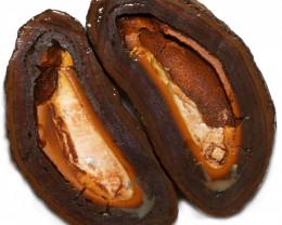 367.35 CTS YOWAH PHANTOM NUTS SPECIMEN-AUSTRALIA [MGW8080]