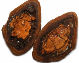 507.35 CTS YOWAH PHANTOM NUTS SPECIMEN-AUSTRALIA [MGW8082]