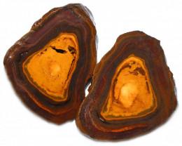 493.90 CTS YOWAH PHANTOM NUTS SPECIMEN-AUSTRALIA [MGW8088]