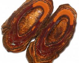 273.35 CTS YOWAH PHANTOM NUTS SPECIMEN-AUSTRALIA [MGW8091]
