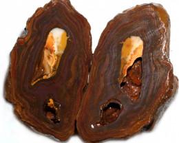 1051.10 CTS YOWAH PHANTOM NUTS SPECIMEN-AUSTRALIA [MGW8093]