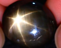 Star Sapphire 13.30Ct Natural 6 Rays Black Star Sapphire ER324/A53