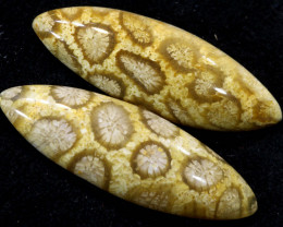 22.55 CTS CORAL INDONESIA  PAIR  TBG-342