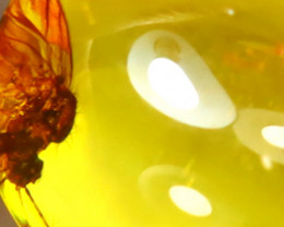 Baltic Amber 0.90Ct Natural Poland Fossil Insect inside Amber DF0315/D1