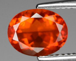 1.47  Cts Very Rare Unheated Mexican Fire Opal Loose Gemstone