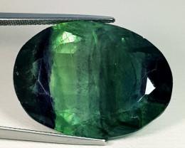 60.71 ct Excellent Gem  Beautiful Oval Cut Natural Bi-Color Fluorite
