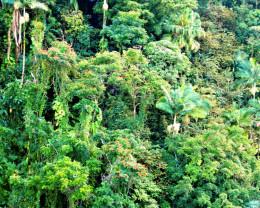 Hawaiian jungle.  Big Island, Hawaii.