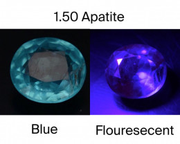 Top Color 1.50 Ct Natural Blue Apatite with Flouresecent