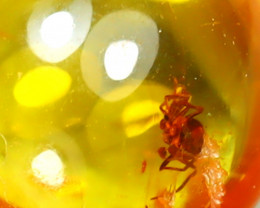 Baltic Amber 0.90Ct Natural Poland Fossil Insect inside Amber D2609/D1