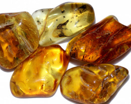 213.95 Cts 5 pcs Natural  Polished Amber from Poland  code CCC2758