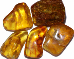 230.80 Cts 5 pcs Natural  Polished Amber from Poland  code CCC2760