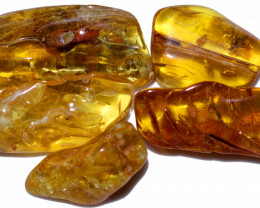 308.00 Cts 5 pcs Natural  Polished Amber from Poland  code CCC2761