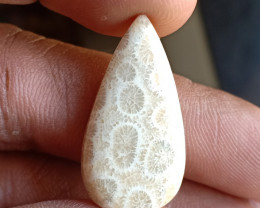 16 Ct Fossil Coral 100% Natural and Genuine Gemstone of Big size VA5532