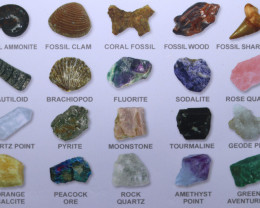FOUR Educational Fossil and Minerals display AHA 412