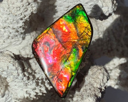 BIG Beautiful Bright Color Unique Pattern Natural Ammolite Gem