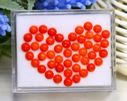 Red Coral 9.8Ct Natural Untreated Italian Red Coral Lot Box A1016