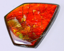 17x14mm,  9.78cts Natural Canadian Ammolite Stone / MA1771