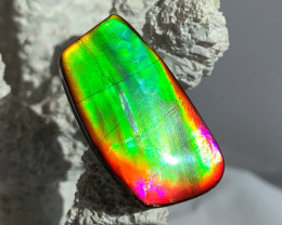 AWESOME COLOR & Super Bright High Quality Natural Ammolite Gem