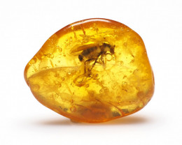 Baltic Amber with natural fossil inclusion - Detailed Fly