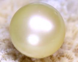 12.60MM 15.32Ct Australian South Sea Salt Water Pearl D1121/A242