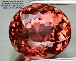 5.47ct  Tourmaline - Padparadscha Color/ Clean/11.05x9.86mm/Certified
