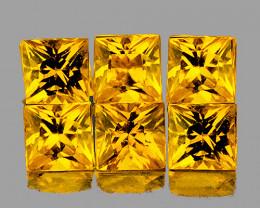 2.80 mm Square Princess 6 pcs 1.12ct Ceylon Yellow Sapphire [VVS]