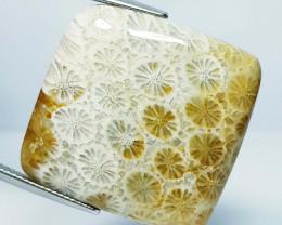 34.20 ct Natural Fossil Coral Rectangular Cabochon  Gemstone