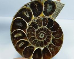 87.07 ct Natural Ammonite Fancy Cabochon  Gemstone