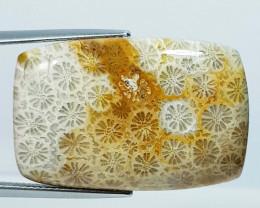 38.15 ct Natural Fossil Coral Rectangular Cabochon  Gemstone