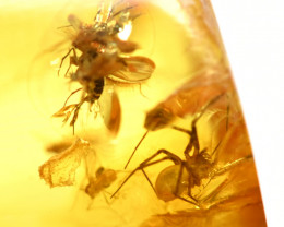 10.01 cts - Baltic Amber with Fossil Spider and more!