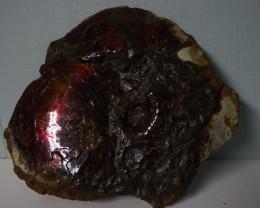 "13"" 13Lbs complete Redblazer Ammolite dragon skin specimen"